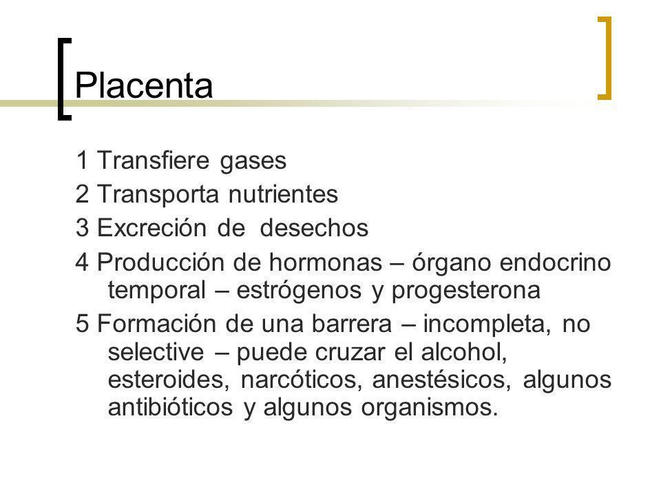 Placenta 1 Transfiere gases 2 Transporta nutrientes 3 Excreción de desechos 4 Producción de hormonas – órgano endocrino temporal – estrógenos y proges
