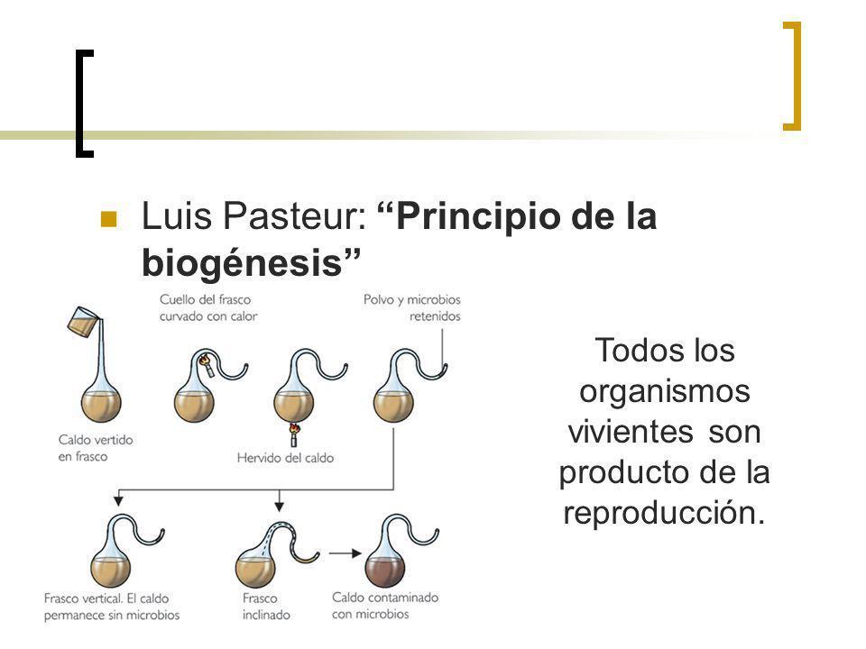 Luis Pasteur: Principio de la biogénesis Todos los organismos vivientes son producto de la reproducción.