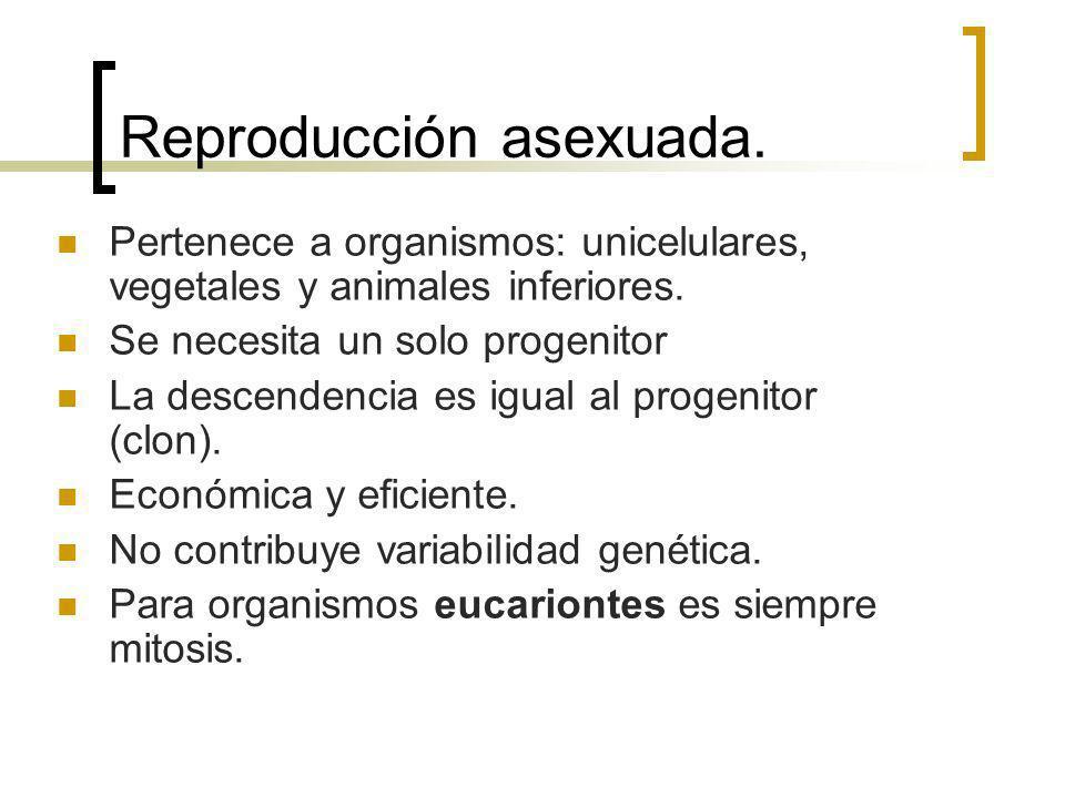 Reproducción asexuada. Pertenece a organismos: unicelulares, vegetales y animales inferiores. Se necesita un solo progenitor La descendencia es igual