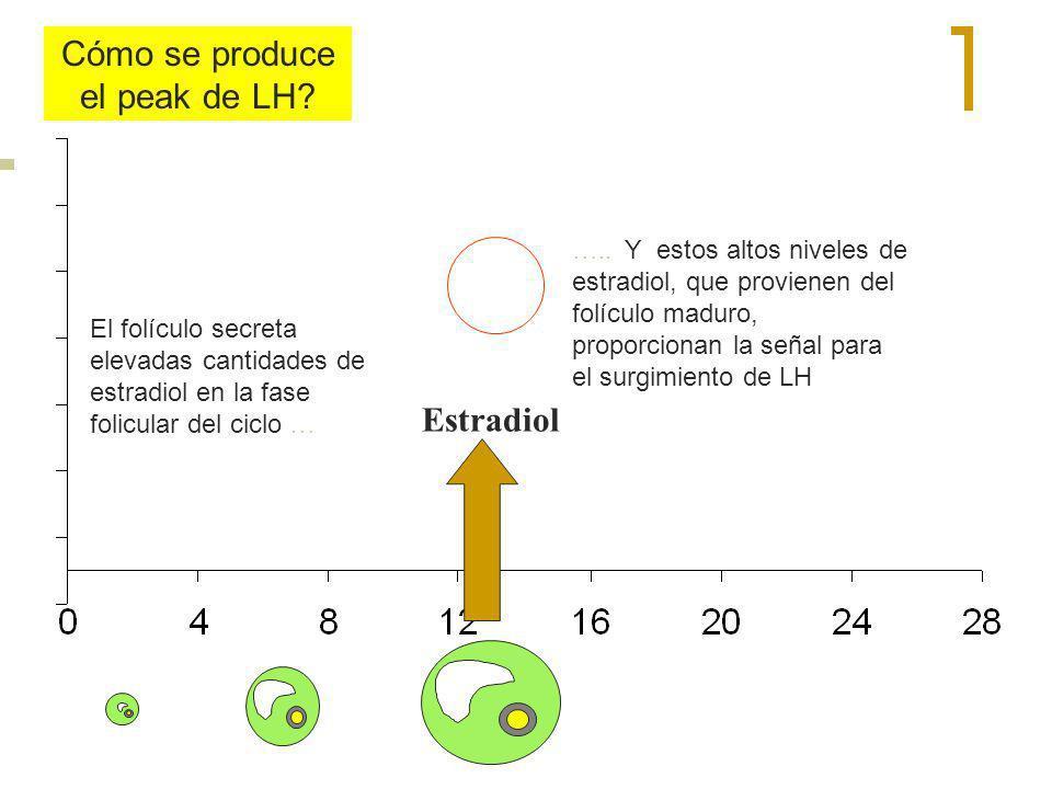 Estradiol El folículo secreta elevadas cantidades de estradiol en la fase folicular del ciclo … Cómo se produce el peak de LH? ….. Y estos altos nivel
