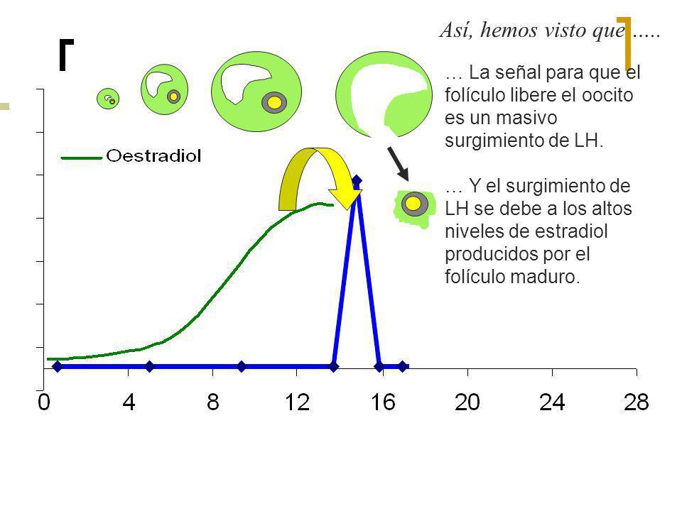 … La señal para que el folículo libere el oocito es un masivo surgimiento de LH. … Y el surgimiento de LH se debe a los altos niveles de estradiol pro