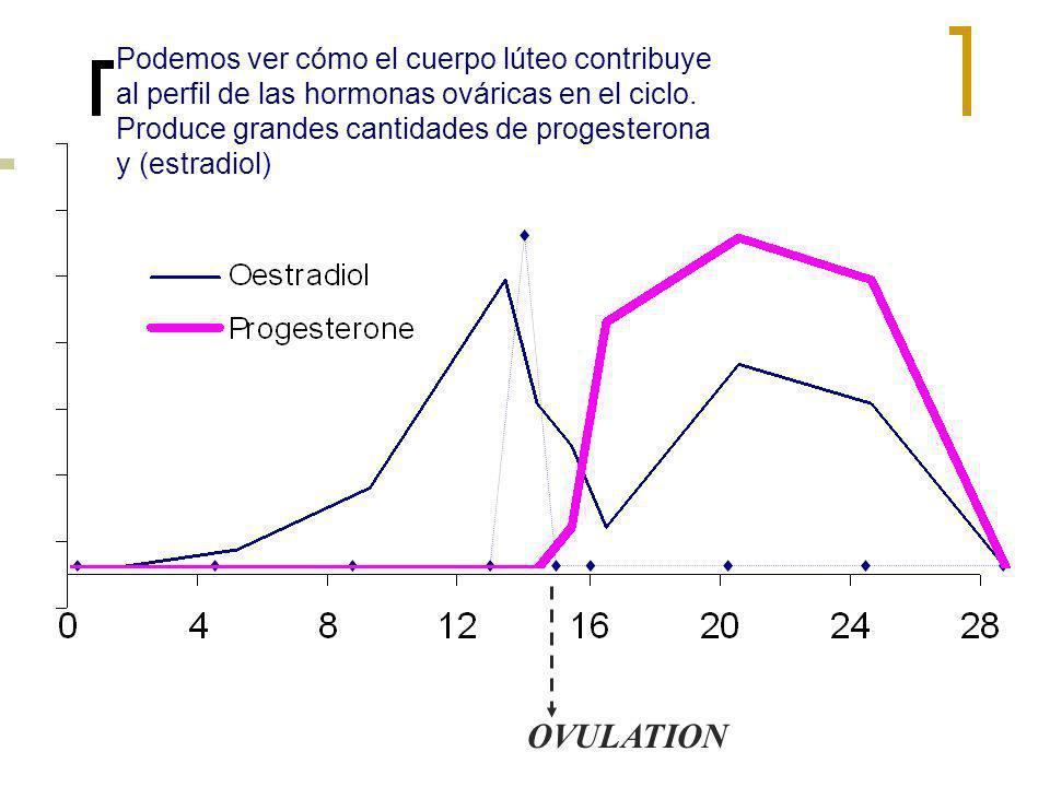 OVULATION Podemos ver cómo el cuerpo lúteo contribuye al perfil de las hormonas ováricas en el ciclo. Produce grandes cantidades de progesterona y (es