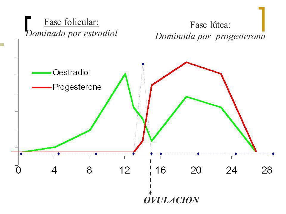 OVULACION Fase folicular: Dominada por estradiol Fase lútea: Dominada por progesterona