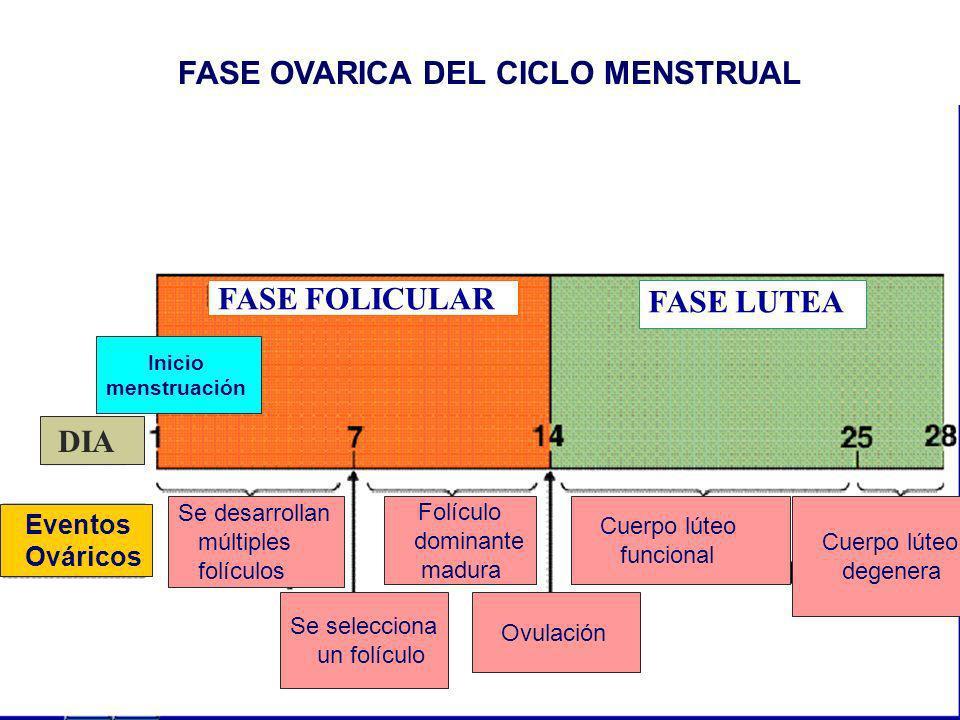 FASE FOLICULAR FASE LUTEA Eventos Ováricos DIA Inicio menstruación Se desarrollan múltiples folículos Se selecciona un folículo Folículo dominante mad