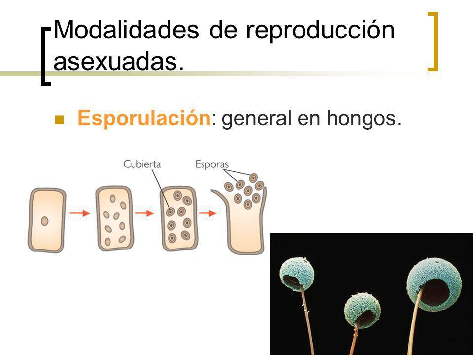 Modalidades de reproducción asexuadas. Esporulación: general en hongos.