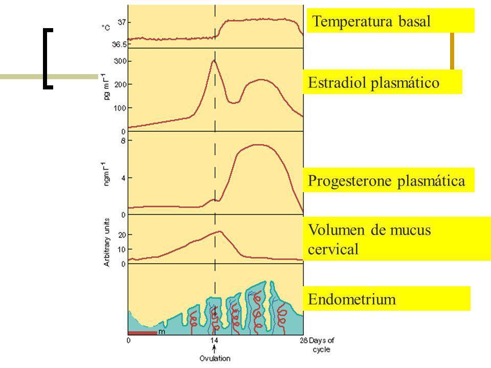 Temperatura basal Estradiol plasmático Progesterone plasmática Volumen de mucus cervical Endometrium