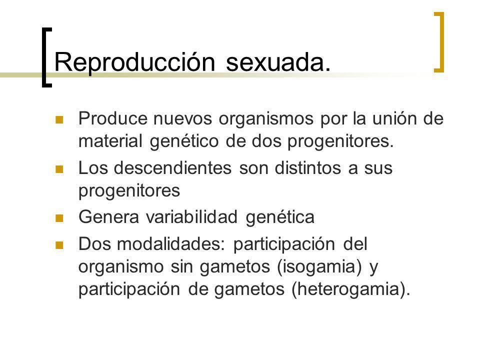 Reproducción sexuada. Produce nuevos organismos por la unión de material genético de dos progenitores. Los descendientes son distintos a sus progenito