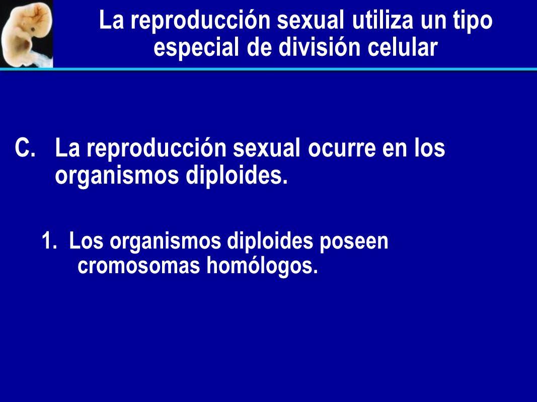 La reproducción sexual utiliza un tipo especial de división celular A. A.Reproducción asexual por mitosis. B. Reproducción sexual por meiosis.
