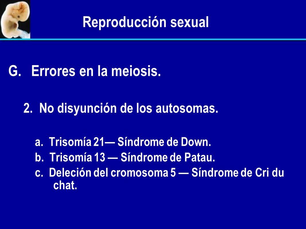 Reproducción sexual G. G.Errores en la meiosis. 1. No disyunción Falla en la separación de los pares de cromosomas homólogos en la anafase de la meios