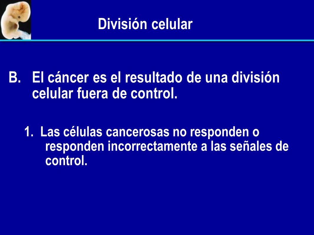 División celular A. A.La división celular es un proceso controlado. 1. La frecuencia y el lapso de tiempo de la división celular es controlada. 2. Las