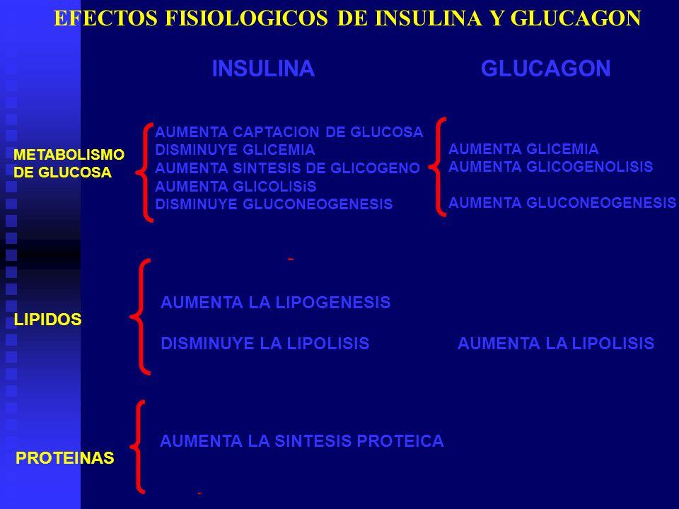 EFECTOS FISIOLOGICOS DE INSULINA Y GLUCAGON METABOLISMO DE GLUCOSA INSULINA GLUCAGON AUMENTA CAPTACION DE GLUCOSA DISMINUYE GLICEMIA AUMENTA SINTESIS