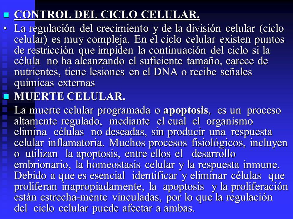 CONTROL DEL CICLO CELULAR. CONTROL DEL CICLO CELULAR. La regulación del crecimiento y de la división celular (ciclo celular) es muy compleja. En el ci
