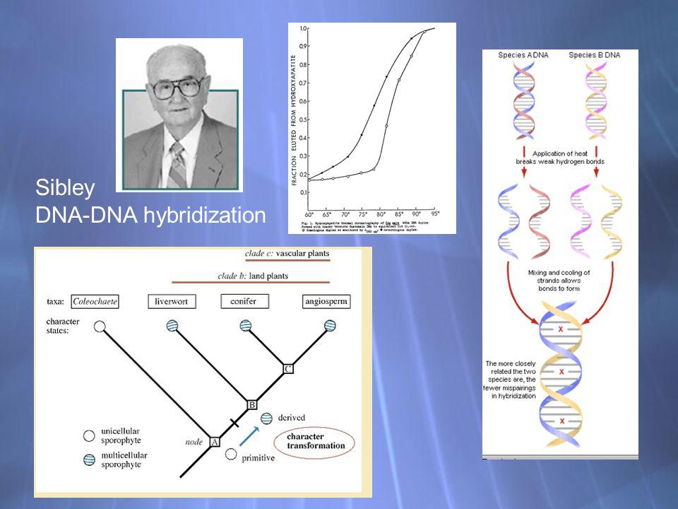 Sibley DNA-DNA hybridization