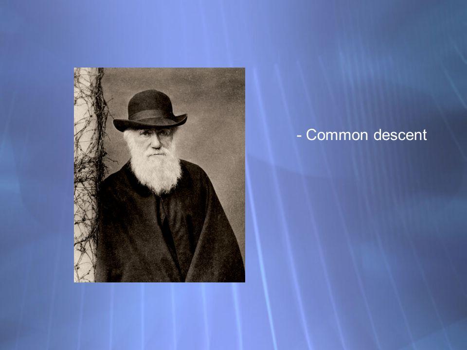 - Common descent