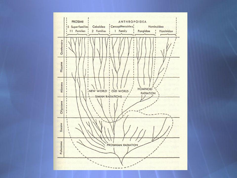 Uso de modelos evolutivos M.