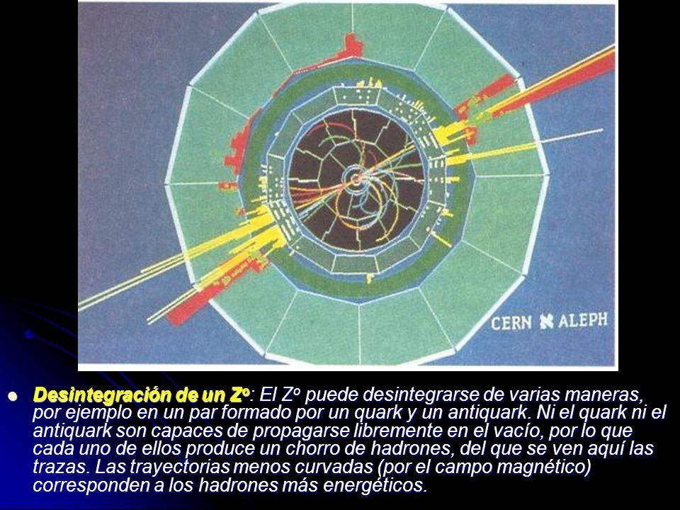 Desintegración de un Z o : El Z o puede desintegrarse de varias maneras, por ejemplo en un par formado por un quark y un antiquark. Ni el quark ni el