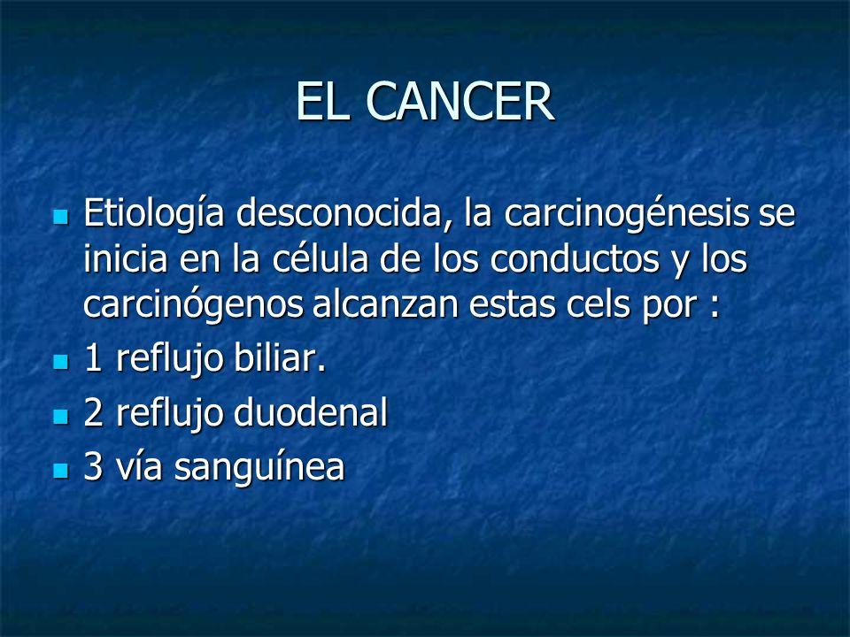 EL CANCER Etiología desconocida, la carcinogénesis se inicia en la célula de los conductos y los carcinógenos alcanzan estas cels por : Etiología desc