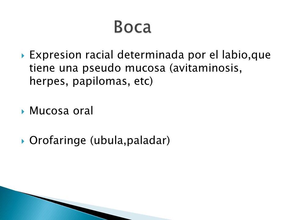 Expresion racial determinada por el labio,que tiene una pseudo mucosa (avitaminosis, herpes, papilomas, etc) Mucosa oral Orofaringe (ubula,paladar)