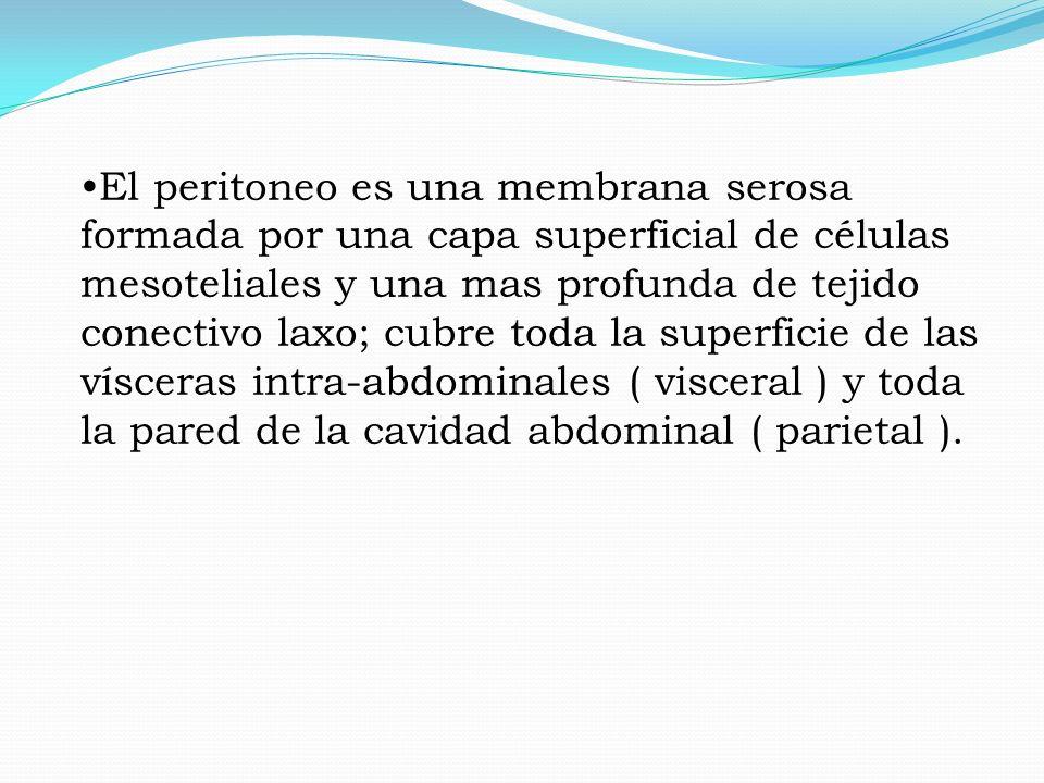 Permitir el deslizamiento de las vísceras intra abdominales, absorción de agua y electrolítos.