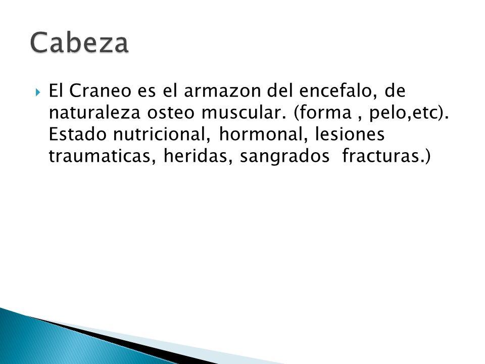 El Craneo es el armazon del encefalo, de naturaleza osteo muscular. (forma, pelo,etc). Estado nutricional, hormonal, lesiones traumaticas, heridas, sa