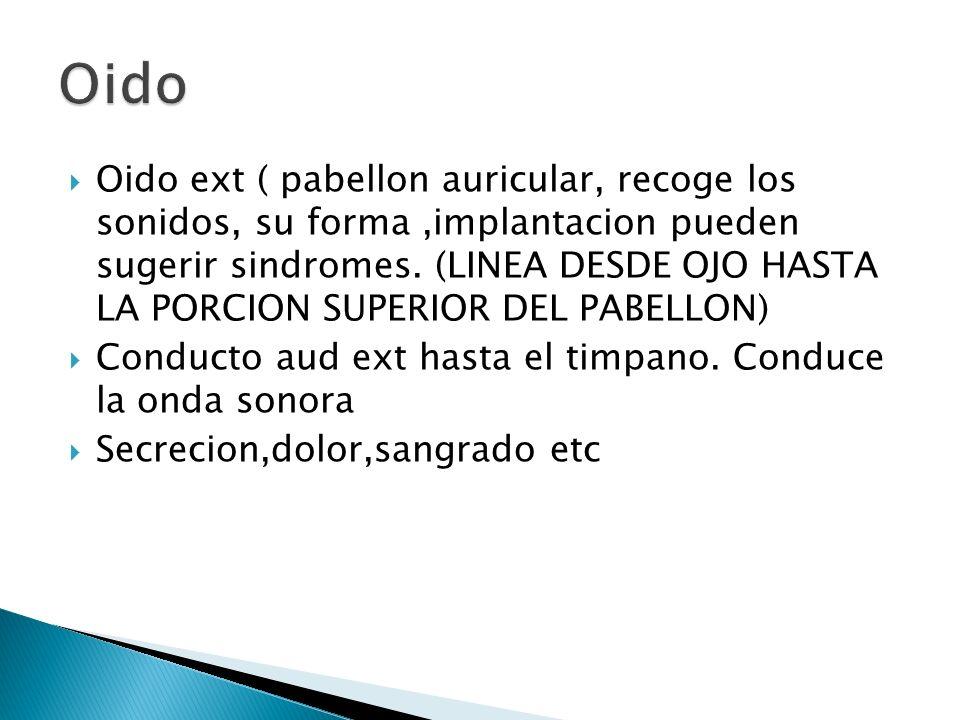 Oido ext ( pabellon auricular, recoge los sonidos, su forma,implantacion pueden sugerir sindromes. (LINEA DESDE OJO HASTA LA PORCION SUPERIOR DEL PABE
