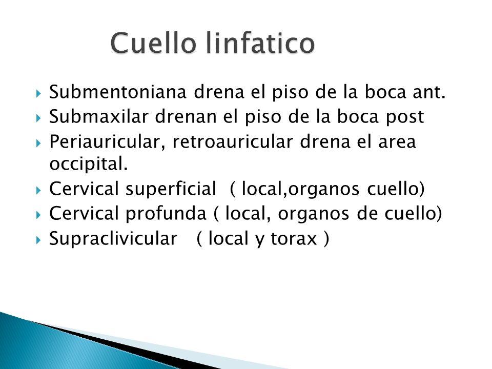 Submentoniana drena el piso de la boca ant. Submaxilar drenan el piso de la boca post Periauricular, retroauricular drena el area occipital. Cervical