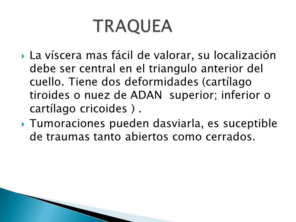 La víscera mas fácil de valorar, su localización debe ser central en el triangulo anterior del cuello. Tiene dos deformidades (cartílago tiroides o nu