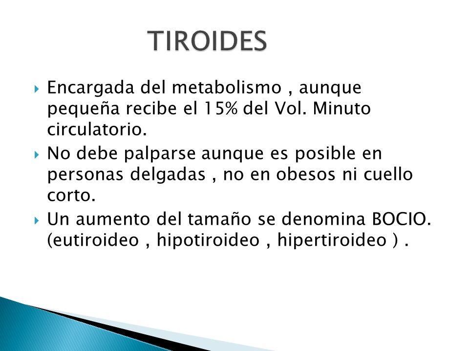 Encargada del metabolismo, aunque pequeña recibe el 15% del Vol. Minuto circulatorio. No debe palparse aunque es posible en personas delgadas, no en o