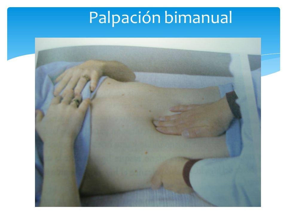 Palpación bimanual