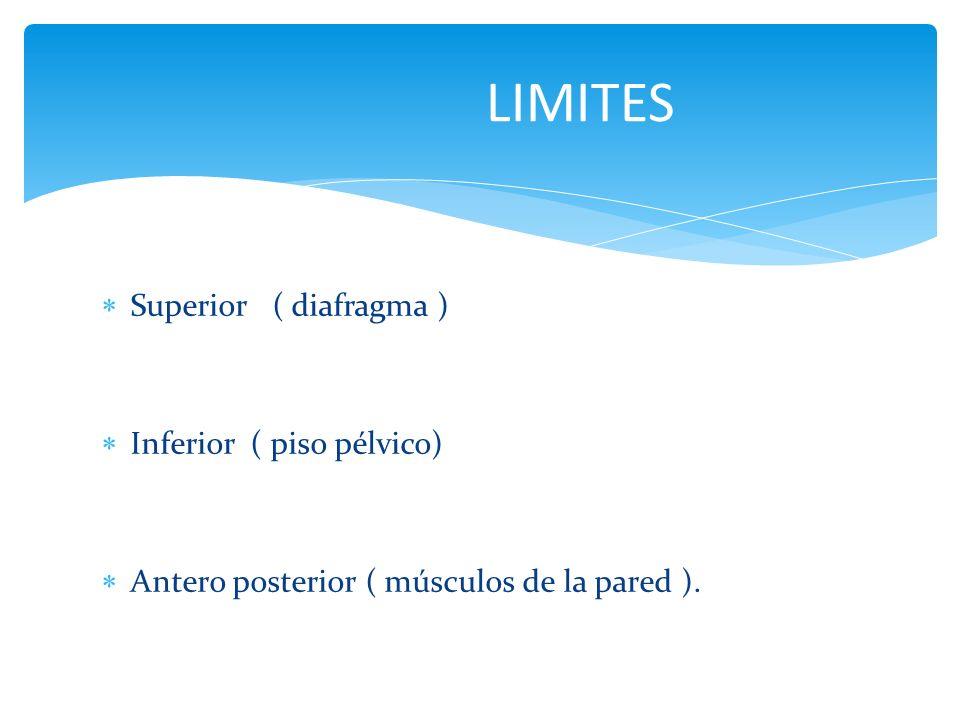 Superior ( diafragma ) Inferior ( piso pélvico) Antero posterior ( músculos de la pared ). LIMITES