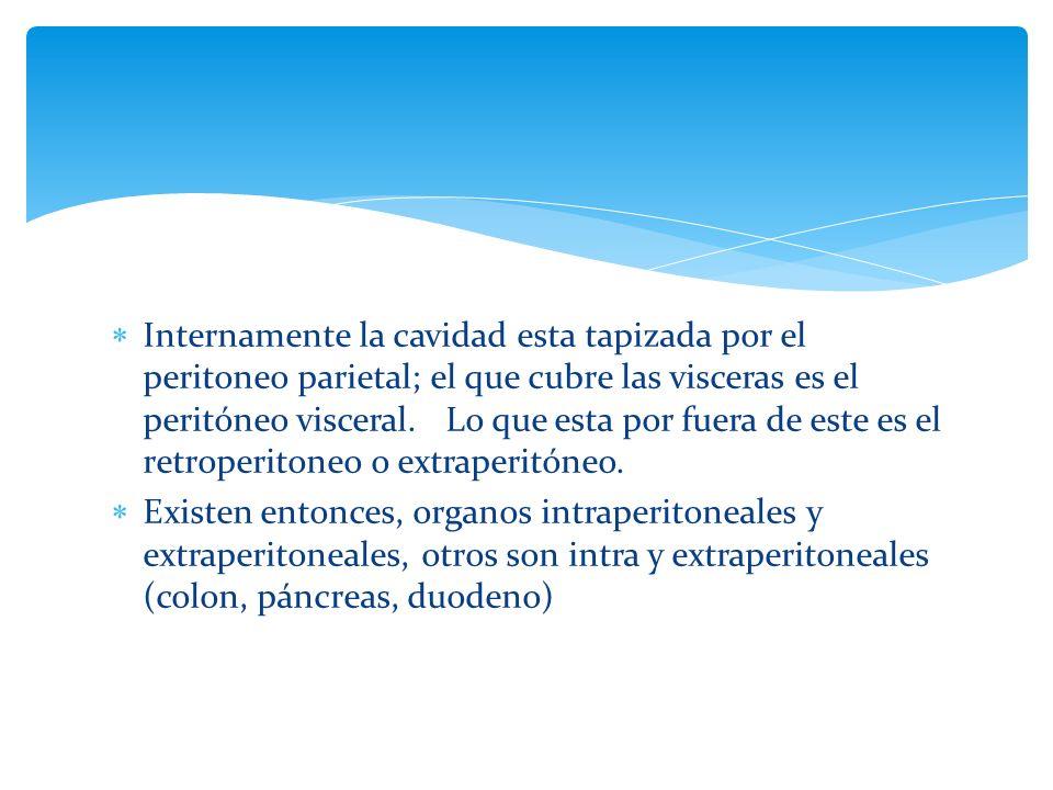 Pancreas Riñon y ureteres Duodeno 2da porcion Colon ascendente y descendente Recto Aorta cava inferior etc.