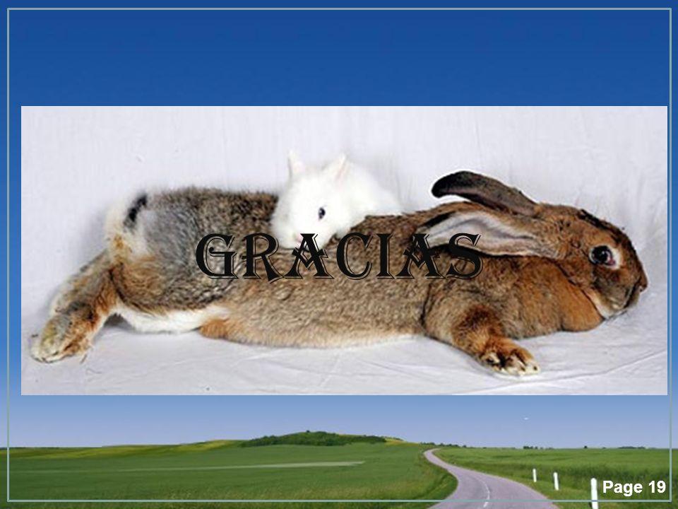 Page 19 GRACIAS