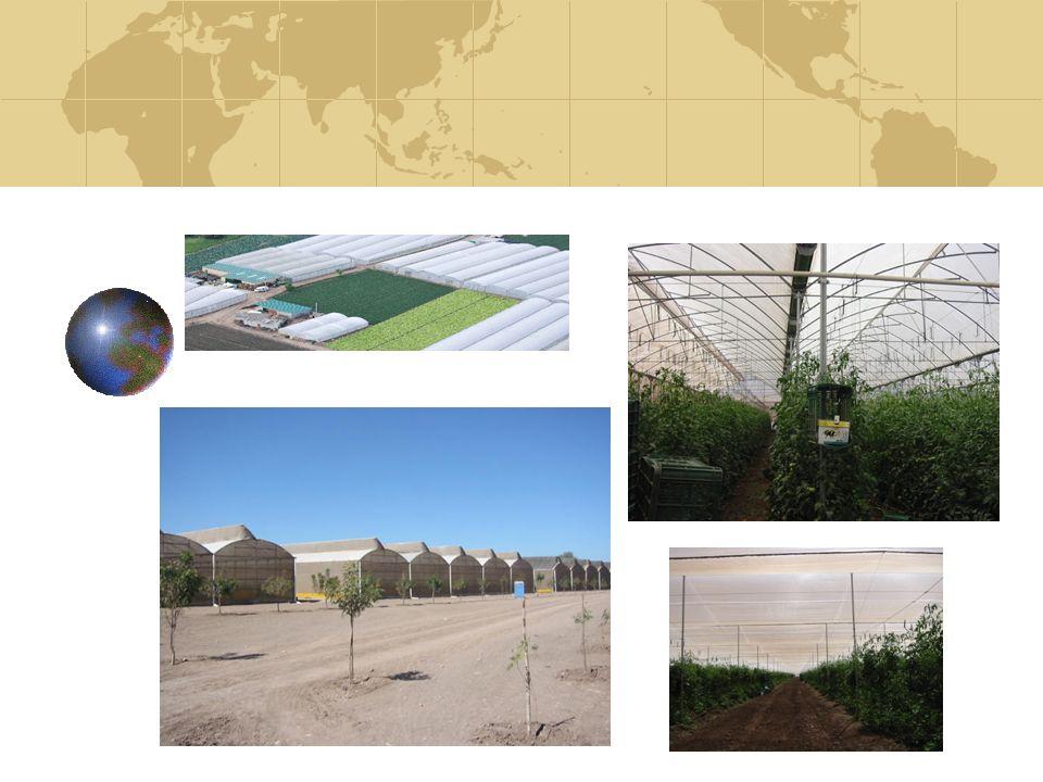 CARACTERISTICAS DEL SEGURO Es un esquema de aseguramiento que consiste en dar de alta los invernaderos de los socios en una póliza que forma parte de una colectividad creada para la AMHPAC, expedida por la compañía AXA SEGUROS, S.A.