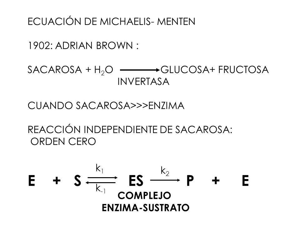ECUACIÓN DE MICHAELIS- MENTEN 1902: ADRIAN BROWN : SACAROSA + H 2 O GLUCOSA+ FRUCTOSA INVERTASA CUANDO SACAROSA>>>ENZIMA REACCIÓN INDEPENDIENTE DE SAC