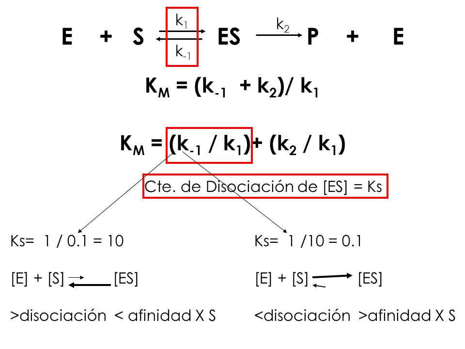 E + S ES P + E k1k1 k -1 k2k2 K M = (k -1 + k 2 )/ k 1 K M = (k -1 / k 1 )+ (k 2 / k 1 ) Cte. de Disociación de [ES] = Ks Ks= 1 / 0.1 = 10 [E] + [S] [