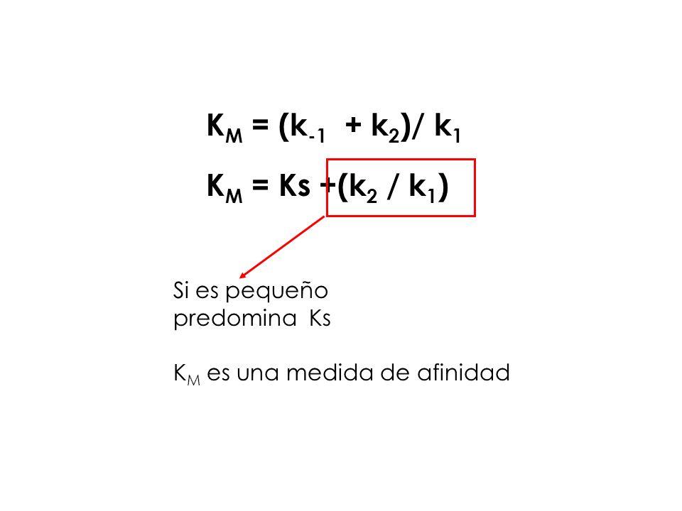 K M = (k -1 + k 2 )/ k 1 K M = Ks +(k 2 / k 1 ) Si es pequeño predomina Ks K M es una medida de afinidad