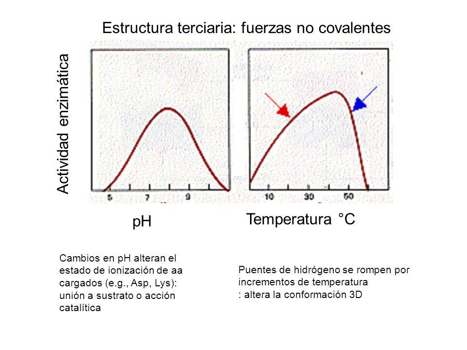 pH Temperatura °C Actividad enzimática Estructura terciaria: fuerzas no covalentes Cambios en pH alteran el estado de ionización de aa cargados (e.g.,