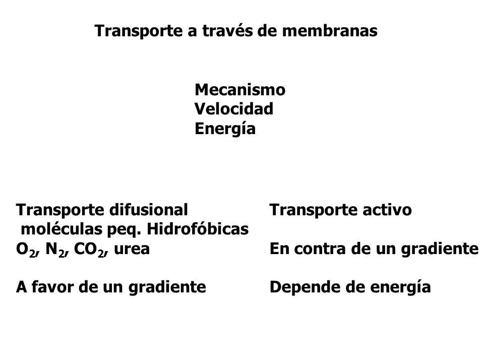 Transporte a través de membranas Mecanismo Velocidad Energía Transporte difusional moléculas peq. Hidrofóbicas O 2, N 2, CO 2, urea A favor de un grad