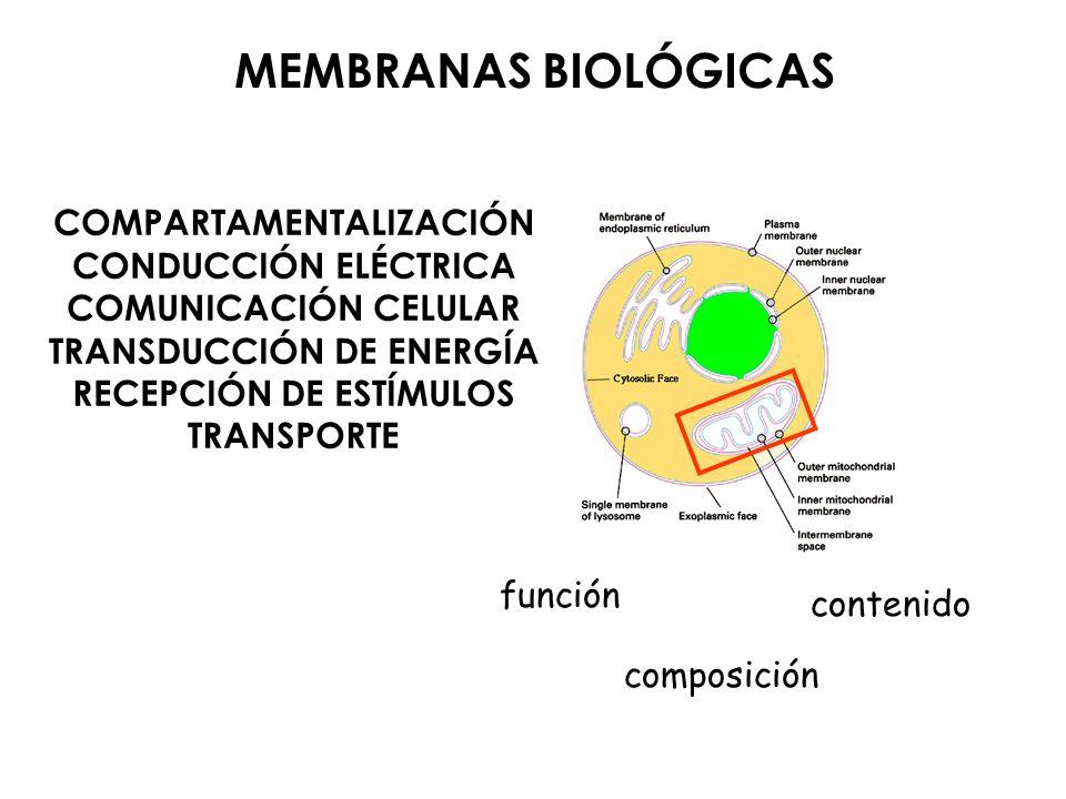 MEMBRANAS BIOLÓGICAS COMPARTAMENTALIZACIÓN CONDUCCIÓN ELÉCTRICA COMUNICACIÓN CELULAR TRANSDUCCIÓN DE ENERGÍA RECEPCIÓN DE ESTÍMULOS TRANSPORTE función