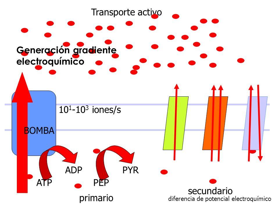 Transporte activo 10 1 -10 3 iones/s BOMBA ATP ADP PEP PYR primario secundario diferencia de potencial electroquímico Generación gradiente electroquím