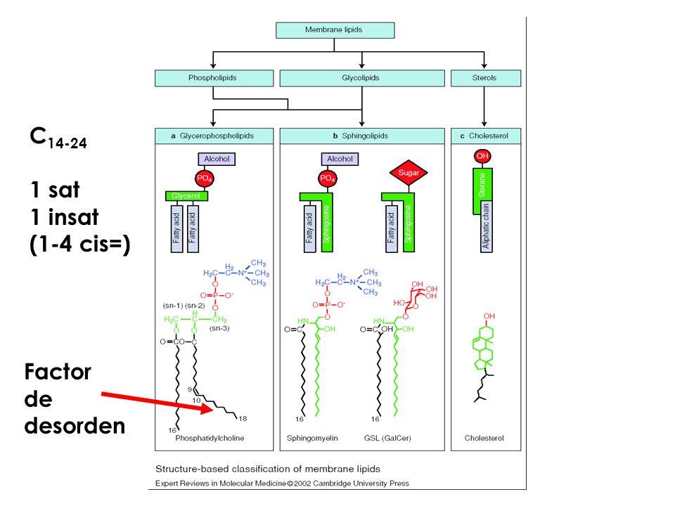 Lípidos: barrera Permeabilidad e Intergridad Proteínas: funciones Específicas CHO´s : caract. sup.