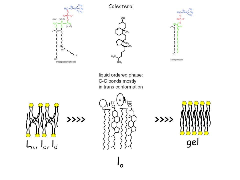 Flexión Bobbing Flip-flop Rotación Difusión lateral Movimiento lípidos membranales Muuuyyy leeeentooo rápido Re:FLIPASAS