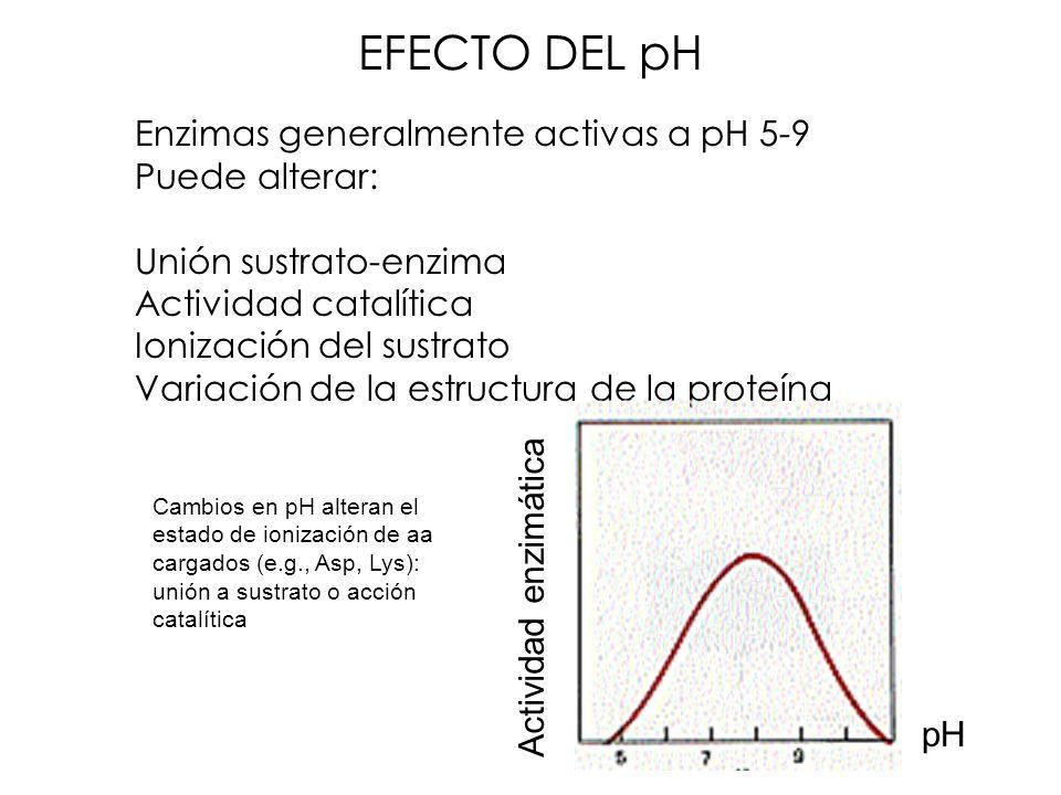 EFECTO DEL pH Enzimas generalmente activas a pH 5-9 Puede alterar: Unión sustrato-enzima Actividad catalítica Ionización del sustrato Variación de la