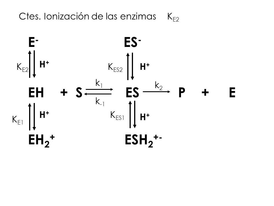 EH + S ES P + E k1k1 k -1 k2k2 E - ES - EH 2 + ESH 2 +- K E2 K E1 K ES1 K ES2 H+H+ H+H+ H+H+ H+H+ Ctes. Ionización de las enzimasK E2