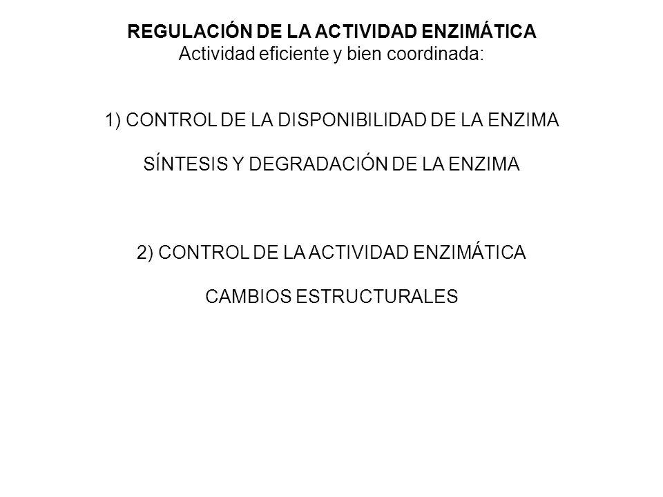 REGULACIÓN DE LA ACTIVIDAD ENZIMÁTICA Actividad eficiente y bien coordinada: 1) CONTROL DE LA DISPONIBILIDAD DE LA ENZIMA SÍNTESIS Y DEGRADACIÓN DE LA