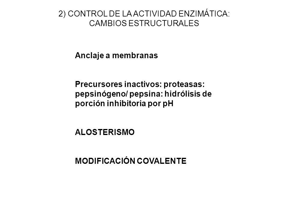 Anclaje a membranas Precursores inactivos: proteasas: pepsinógeno/ pepsina: hidrólisis de porción inhibitoria por pH ALOSTERISMO MODIFICACIÓN COVALENT