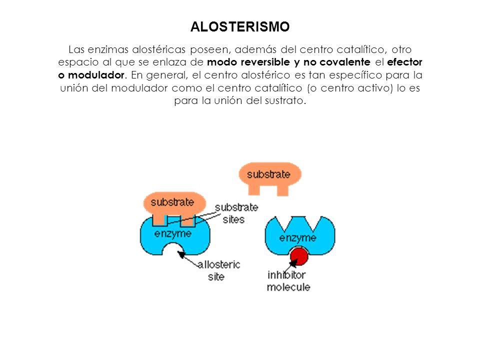 Las enzimas alostéricas poseen, además del centro catalítico, otro espacio al que se enlaza de modo reversible y no covalente el efector o modulador.