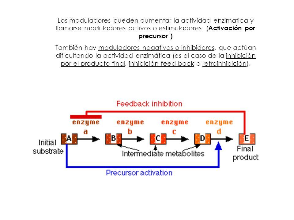 Los moduladores pueden aumentar la actividad enzimática y llamarse moduladores activos o estimuladores ( Activación por precursor ) También hay modula