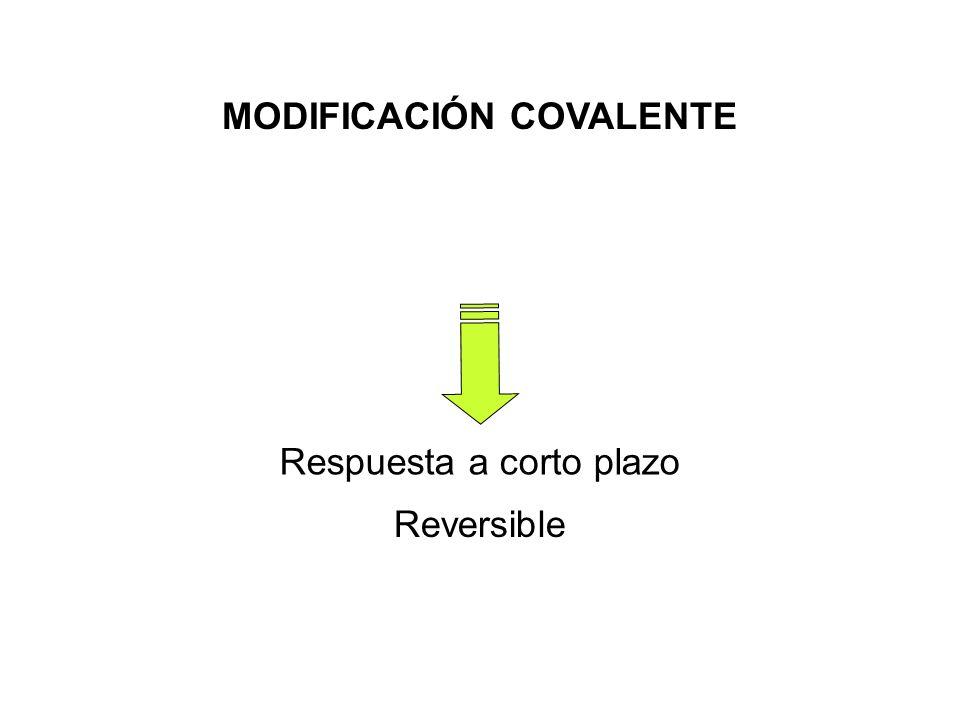 MODIFICACIÓN COVALENTE Respuesta a corto plazo Reversible