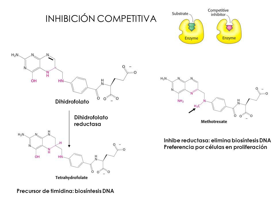 INHIBICIÓN COMPETITIVA Dihidrofolato reductasa Precursor de timidina: biosíntesis DNA Inhibe reductasa: elimina biosíntesis DNA Preferencia por célula
